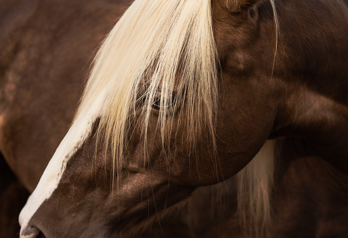 Equine Facilitated Human Development, Equine Facilitated Psychotraumatology, psychotherapist qualifications, equine therapy courses, equine assisted therapy training